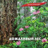 Звуки природы - Дождливый лес