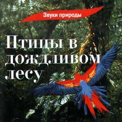 Звуки природы - Птицы в дождливом лесу